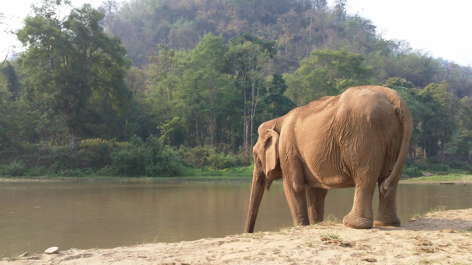 Tony looked after Juranee, another ENP elephant, for 3 months as a volunteer.  She is blind.  Picture kindly supplied by Elephant Haven