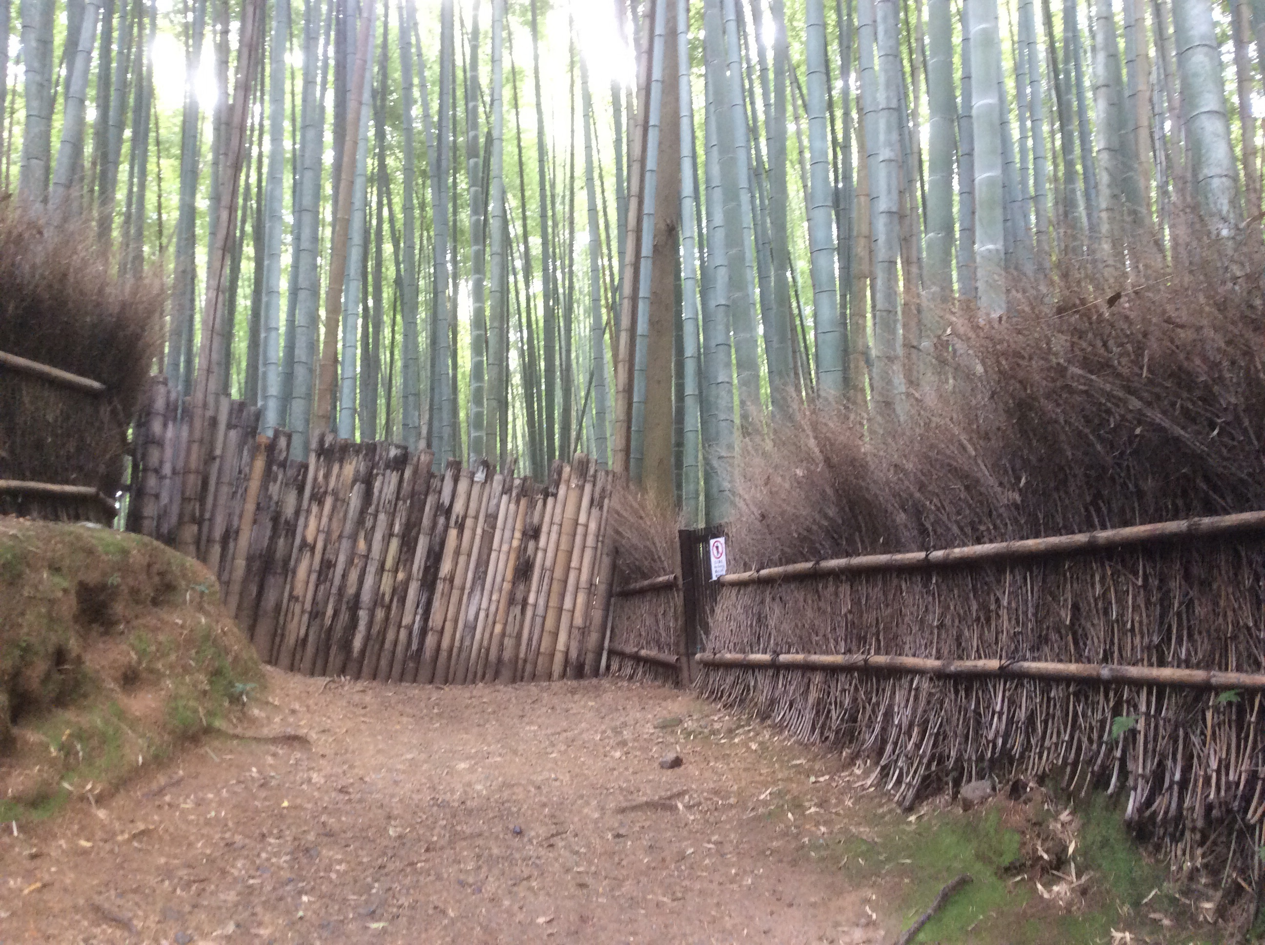 The bamboo forest path.