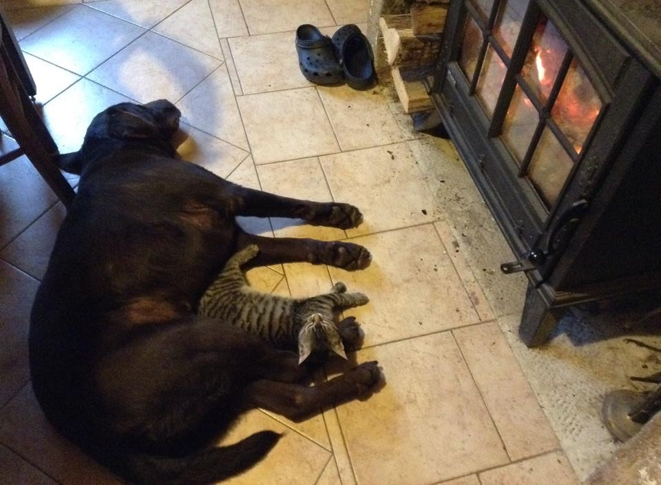 Wooster and Lilly cuddling up by the fire.
