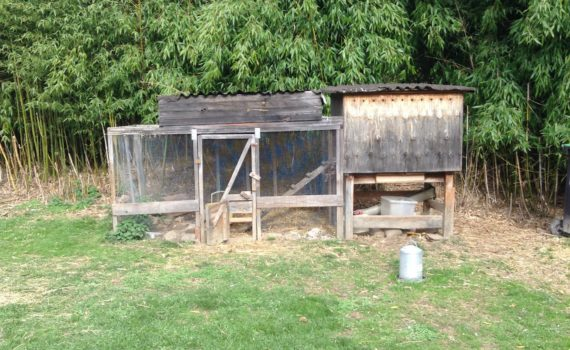 Hen house ideas.