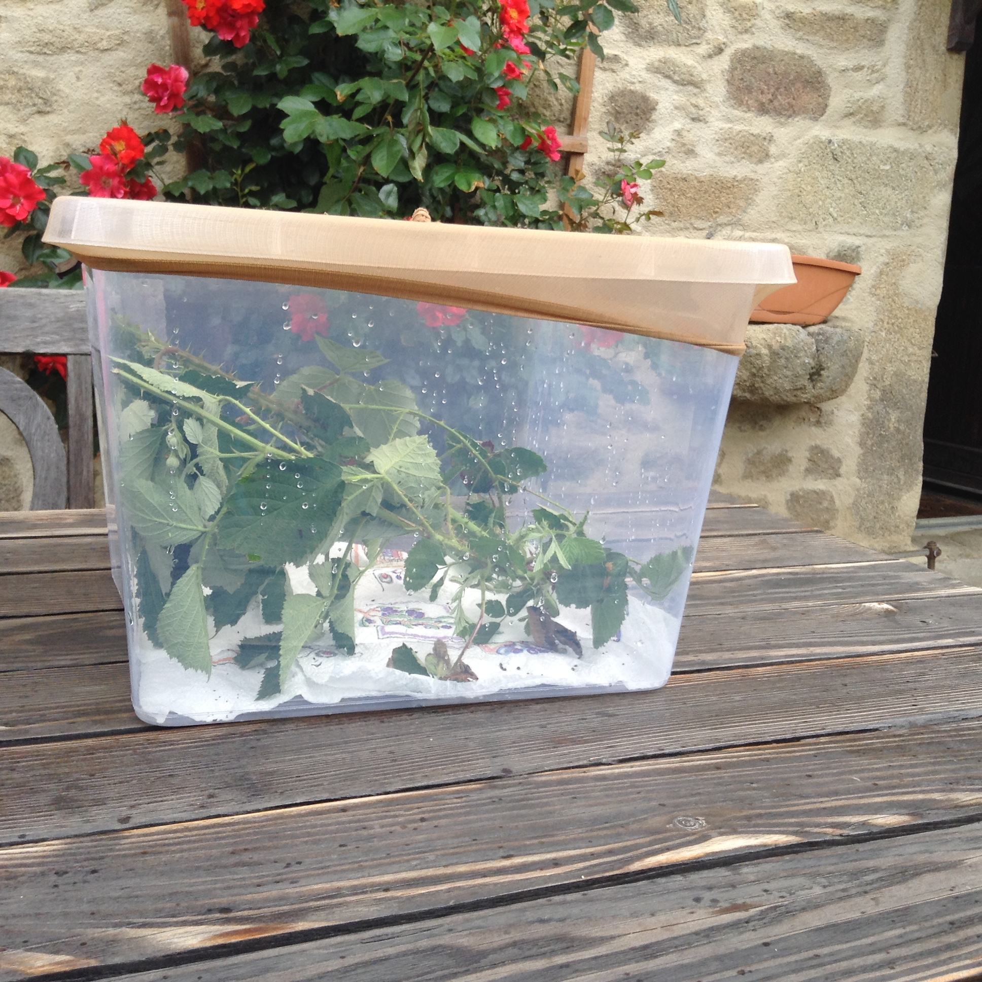 Stick insect container